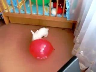У кролика бомбануло больше , чем у шарика (6 sec)
